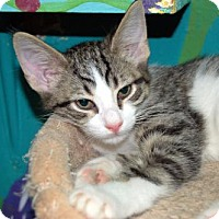 Adopt A Pet :: Kitten ID# 1799 - Lake City, MI