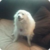 Adopt A Pet :: MISTY - Royal Palm Beach, FL