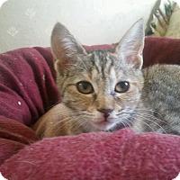 Adopt A Pet :: Morlee - Media, PA