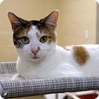 Adopt A Pet :: Cobble - Columbia, IL