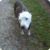 Adopt A Pet :: Barney - Newnan City, GA