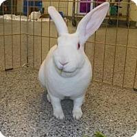 Adopt A Pet :: Rebecca - Lowell, MA