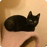 Adopt A Pet :: Rascal - North Wilkesboro, NC