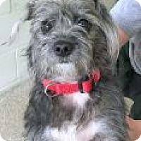 Adopt A Pet :: Jellie - Encinitas, CA