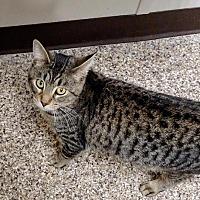 Adopt A Pet :: Eugene - Fremont, OH