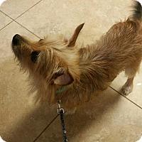Adopt A Pet :: Tobi - Windermere, FL