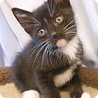 Adopt A Pet :: Duke - Reston, VA