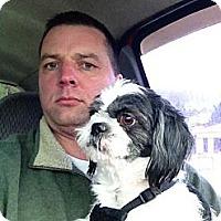 Adopt A Pet :: Corrie - Hazard, KY