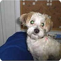 Adopt A Pet :: Mia - Rigaud, QC