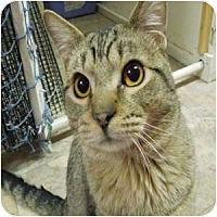 Adopt A Pet :: Nemo - Phoenix, AZ
