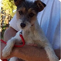 Adopt A Pet :: MUFFY - Phoenix, AZ