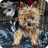Adopt A Pet :: Frodo - Redding, CA