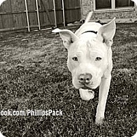 Adopt A Pet :: ROCCO - Colleyville, TX