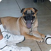 Adopt A Pet :: Roo - Minneola, FL