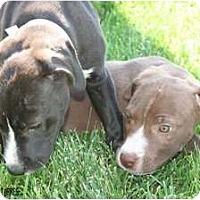 Adopt A Pet :: Samantha - Fresno, CA