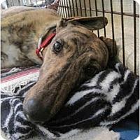 Adopt A Pet :: Watson - Chagrin Falls, OH