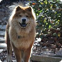 Adopt A Pet :: Oso - Tucker, GA