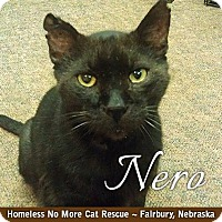 Adopt A Pet :: Nero - Fairbury, NE
