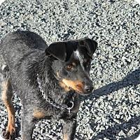 Adopt A Pet :: Annie - Beaver, UT
