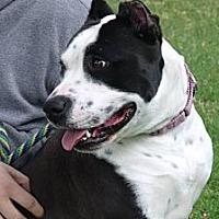 Adopt A Pet :: Elsie - Sherman Oaks, CA