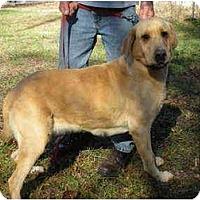 Adopt A Pet :: Suki - Lincolndale, NY