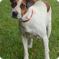 Adopt A Pet :: Elsie - Groton, MA