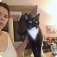Adopt A Pet :: Carolina*URGENT* - Berkeley Hts, NJ