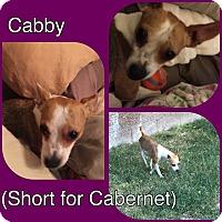 Adopt A Pet :: CABERNET - Rancho Cucamonga, CA