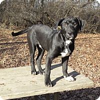 Adopt A Pet :: Jake Arrieta- Foster to Adopt - Wood Dale, IL