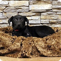 Adopt A Pet :: Aimee - Waldorf, MD