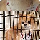 Adopt A Pet :: Emerson