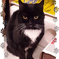 Adopt A Pet :: Hope - Fallston, MD