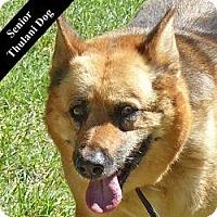 Adopt A Pet :: Binola T. - Cupertino, CA