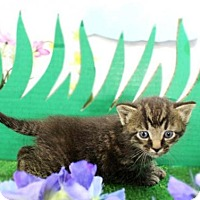 Adopt A Pet :: Leo - Harrisonburg, VA
