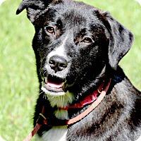Adopt A Pet :: Taylor - Willingboro, NJ