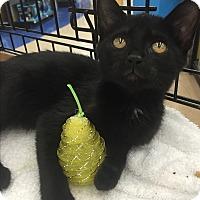 Adopt A Pet :: Catalina  $20 - Lincolnton, NC