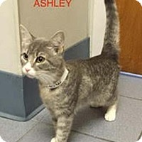 Adopt A Pet :: Ashley - Merrifield, VA