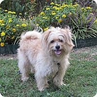 Adopt A Pet :: QUIGLEY - Hartford, CT