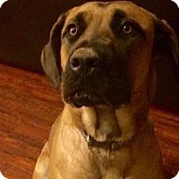Adopt A Pet :: Sadie - Goodyear, AZ