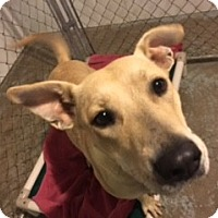 Shepherd (Unknown Type) Mix Dog for adoption in Traverse City, Michigan - Roxie