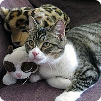 Adopt A Pet :: Ashton - Mississauga, Ontario, ON