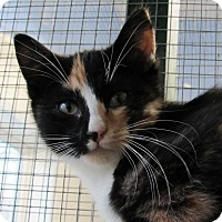 Adopt A Pet :: Beauty - Grinnell, IA