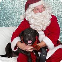 Adopt A Pet :: Hoover - San Francisco, CA