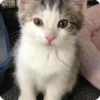 Adopt A Pet :: Tulip - River Edge, NJ