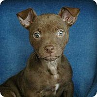 Adopt A Pet :: Isabella - Sacramento, CA