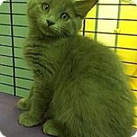 Adopt A Pet :: Liv Tyler - Richboro, PA