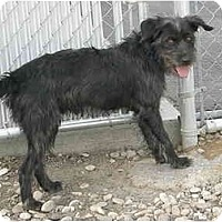 Adopt A Pet :: Barkely - Meridian, ID