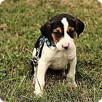 Adopt A Pet :: Gabby - Staunton, VA