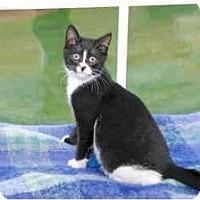 Adopt A Pet :: Dancy - Colmar, PA