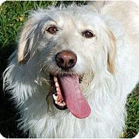 Adopt A Pet :: Lindsay - Kansas City, MO